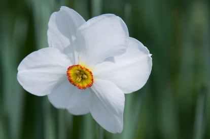 daffodil-flower-blossom-bloom-46196.jpeg